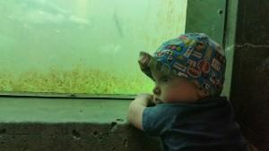 Gunnar and salmon at the locks.